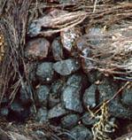 Briar Pile in Greece